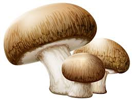 Clarkes Mushrooms